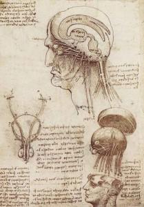 Leonardo Da Vinci 02