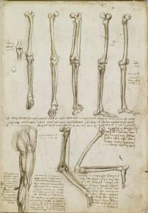 Leonardo Da Vinci 03