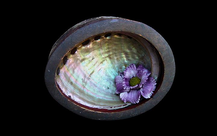 C9 Flor de caracola