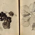 Libreta de bocetos a lápiz de George Seurat