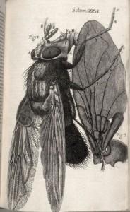 Micrografía de unamosca, R. Hooke - Jo. Martyn & Ja. Allestry©