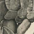 sheme XXXIV Robert Hooke entrada