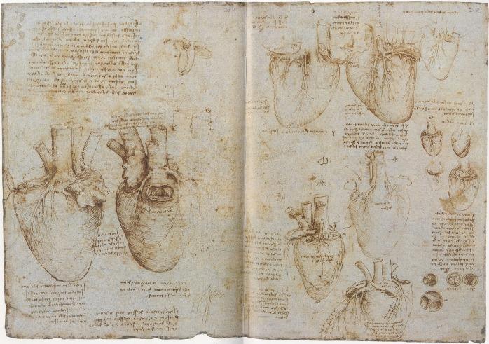Leonardo da Vinci, estudio del corazón.