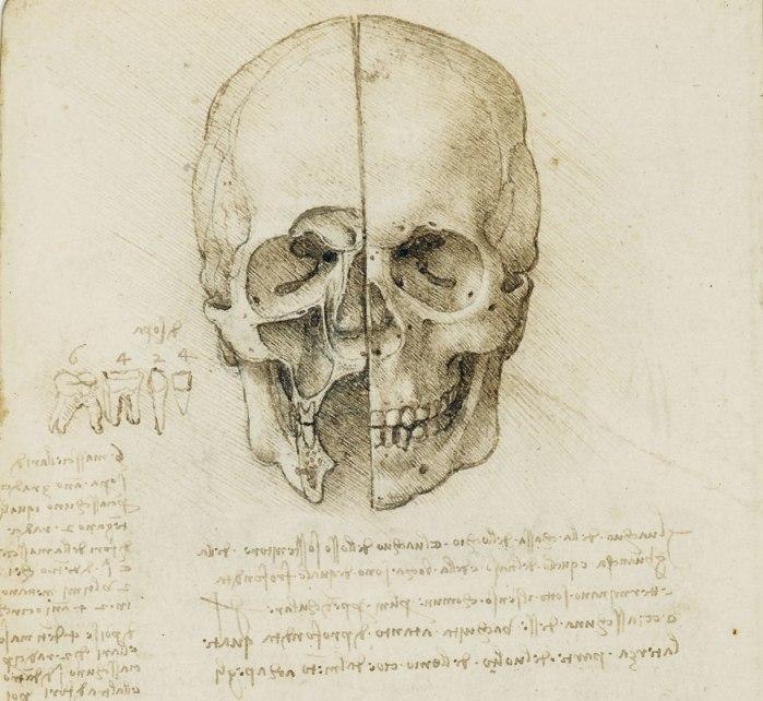 Leonardo da Vinci, estudio del cráneo humano (detalle).