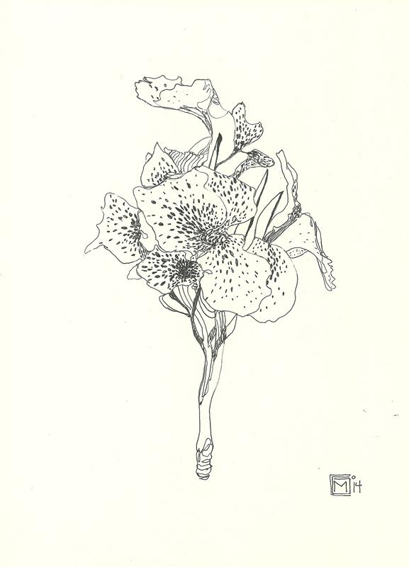 naturaleza tinta mediosoleado (7)