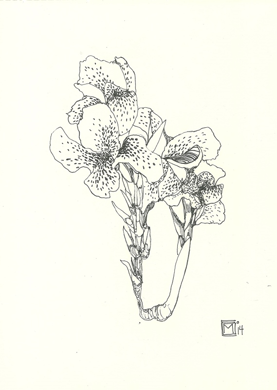 naturaleza tinta mediosoleado (8)