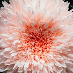 Creando arte con papel, flor gigante creada por Tiffanie Turner