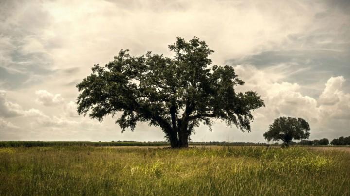 Fotograma de la primera temporada de True Detective, de HBO